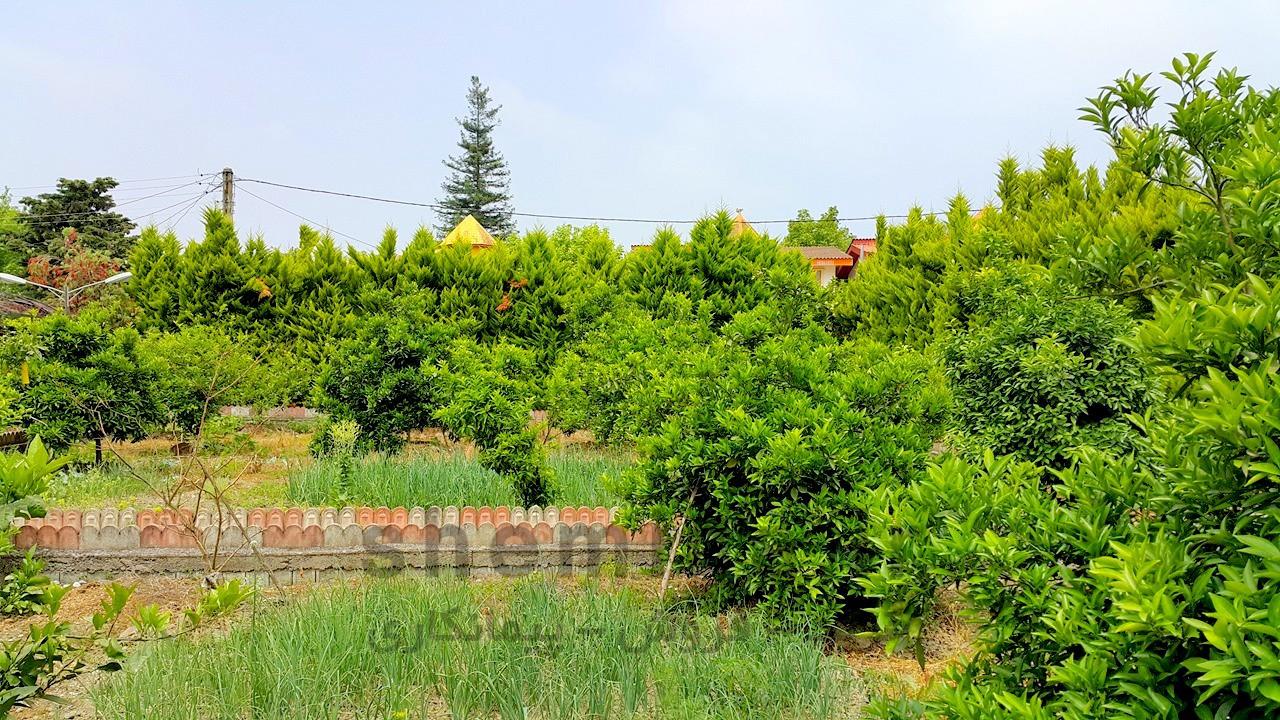 فروش باغ ویلا در نوشهر