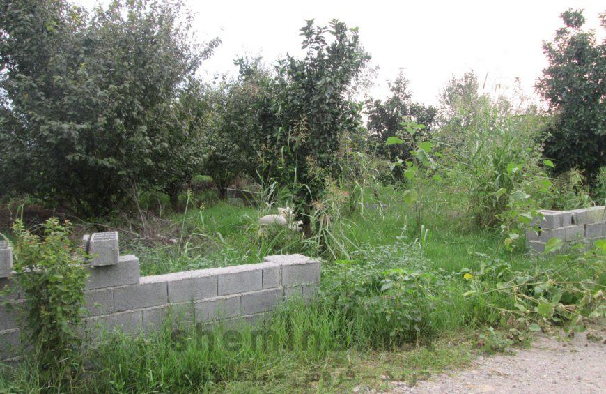 خرید زمین جنگلی در آمل