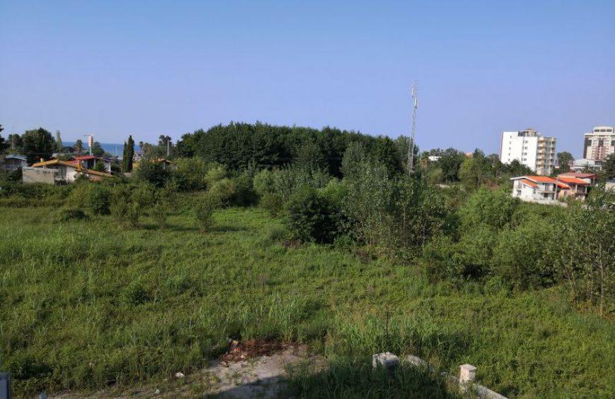 خرید زمین جنگلی در کلارآباد