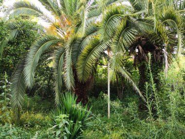 خرید زمین جنگلی در متل قو