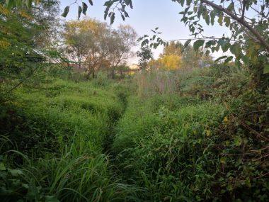 فروش زمین جنگلی در کلارآباد