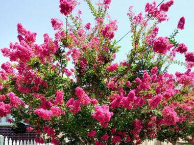کاشت گیاهان زینتی در سرخرود
