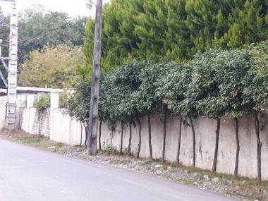 خرید زمین عباس آباد بورایش