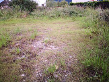 فروش زمین در کلارآباد با چشم انداز عالی