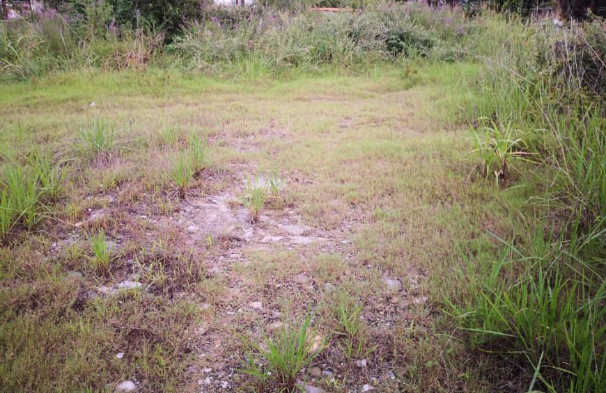 فروش زمین با موقعیت جنگلی در دانیال – متل قو