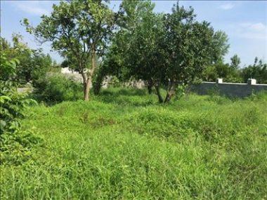 خرید زمین با سند ششدانگ در عباس آباد