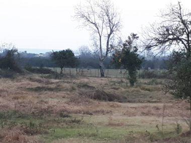 خرید زمین در عباس آباد با موقعیت عالی – کرکاس