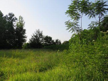 فروش زمین در سی سرا – متل قو با موقعیت عالی