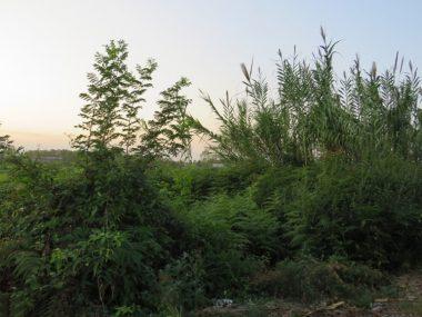 فروش زمین در عباس آباد – بورایش
