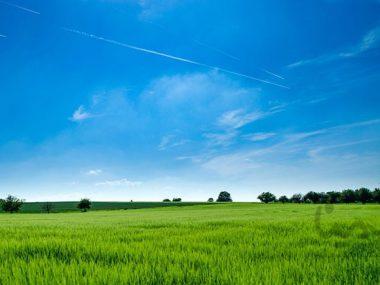 توجه به چه مواردی در خرید زمین در شمال اهمیت دارد؟