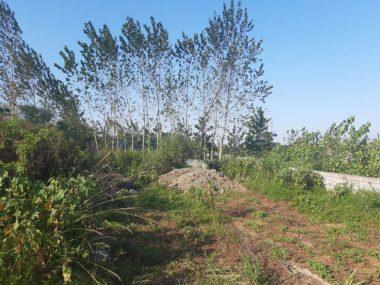 خرید زمین در چالوس کلاچان