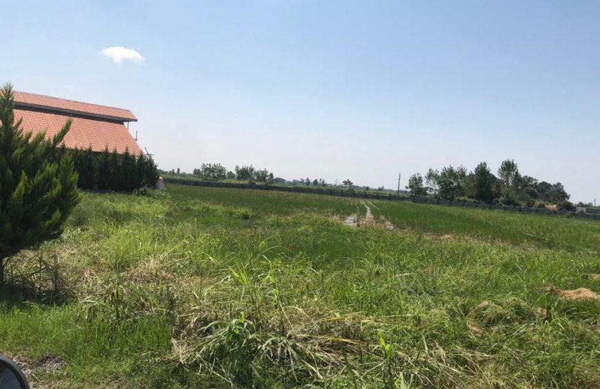 خرید زمین در امام رود چالوس