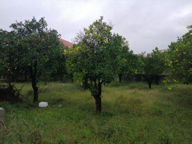 خرید زمین در نوشهر وازیوار