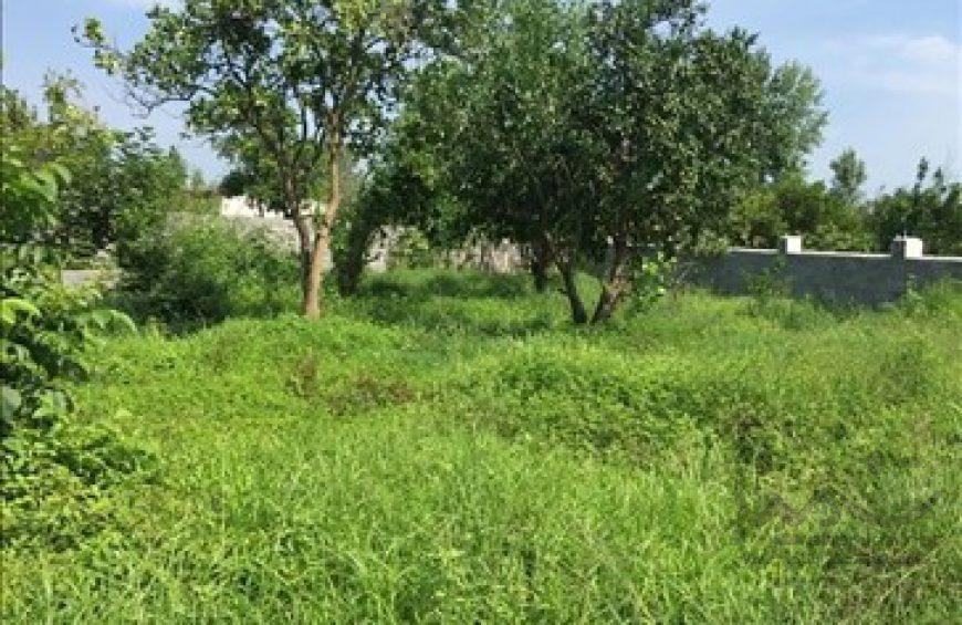 زمین مسکونی در میانده چالوس