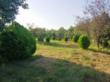 فروش زمین کشاورزی درنشتارود