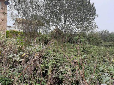 خرید زمین در هچرود امام رود